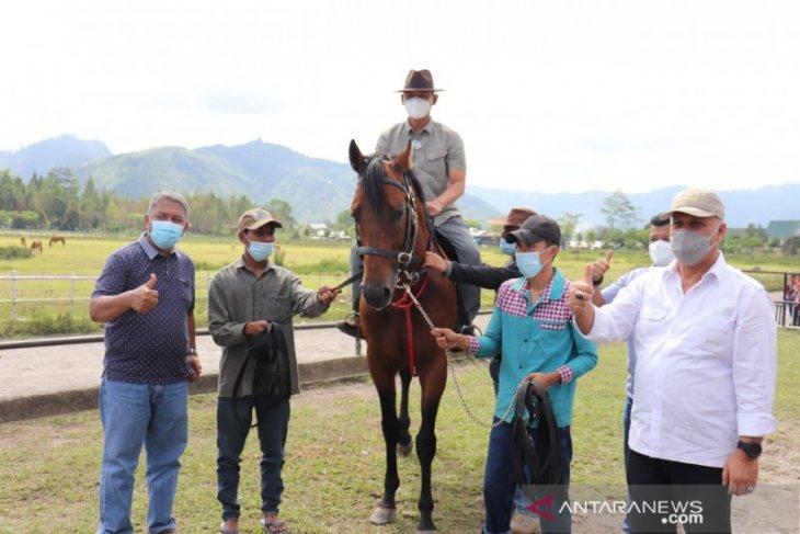 Pemkab Aceh Tengah dapat hibah kuda pejantan New Zealand