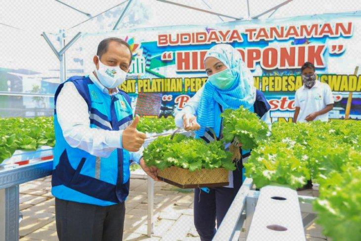 PT. PLN tingkatkan produktivitas tanaman hidroponik di Maluku Utara