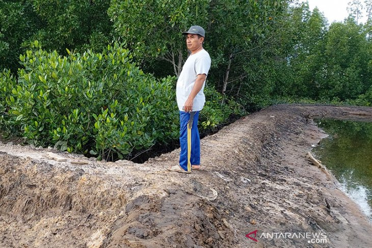 Preserving Indonesia's mangroves crucial for climate change mitigation