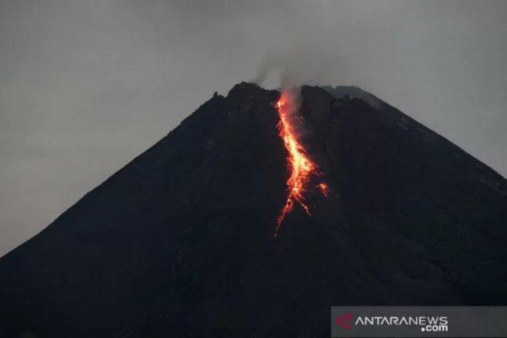 Gunung Merapi meluncurkan guguran lava pijar 1.000 meter