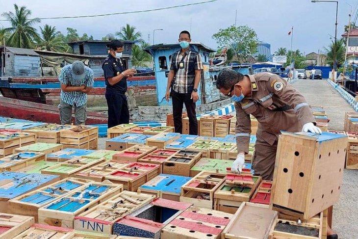 Bea cukai gagalkan penyelundupan 79 kotak hewan di Aceh Tamiang
