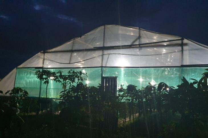 Listrik dorong pertumbuhan bisnis agriculture hidroponik di Siantan