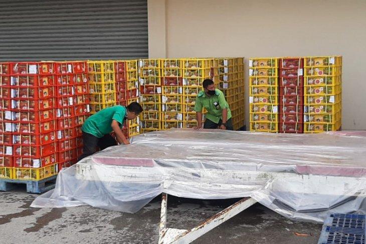 Balai Karantina Padang sertifikasi manggis ekspor senilai Rp32,88 miliar