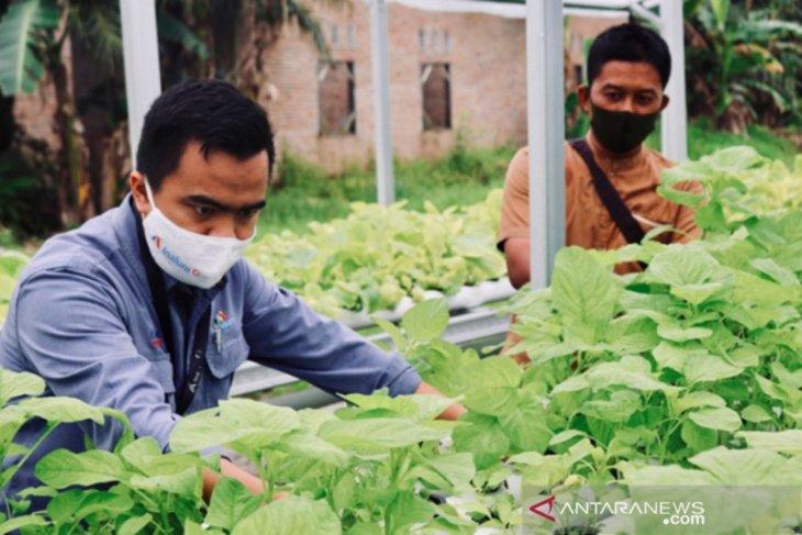 Inalum bantu petani sayuran  hidroponik di Kuala Tanjung