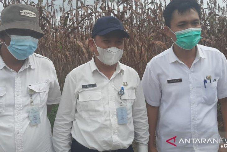 Pemprov Belitung tetapkan 5.000 ha lumbung pangan padi organik