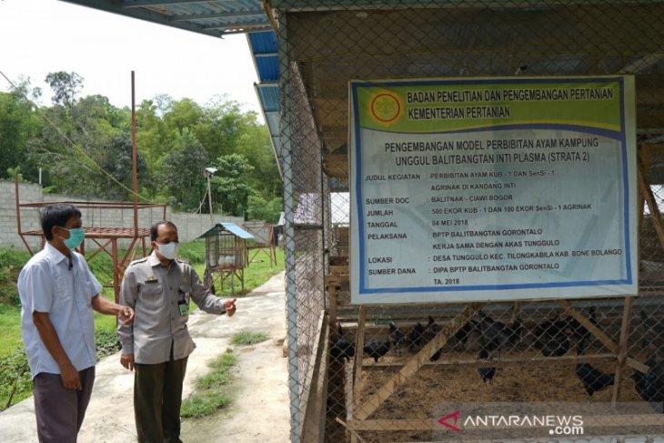 BPTP Gorontalo bantu peternak kembangkan ayam KUB