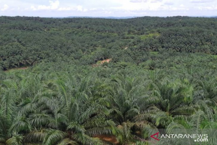 PT SAWA telah ganti rugi lahan Long Bentuq