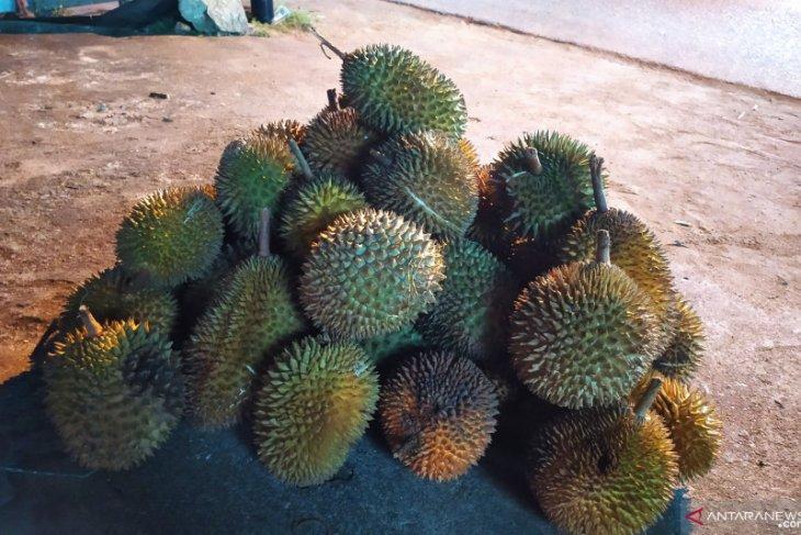Curah hujan yang tinggi pengaruhi jumlah durian di Kalbar