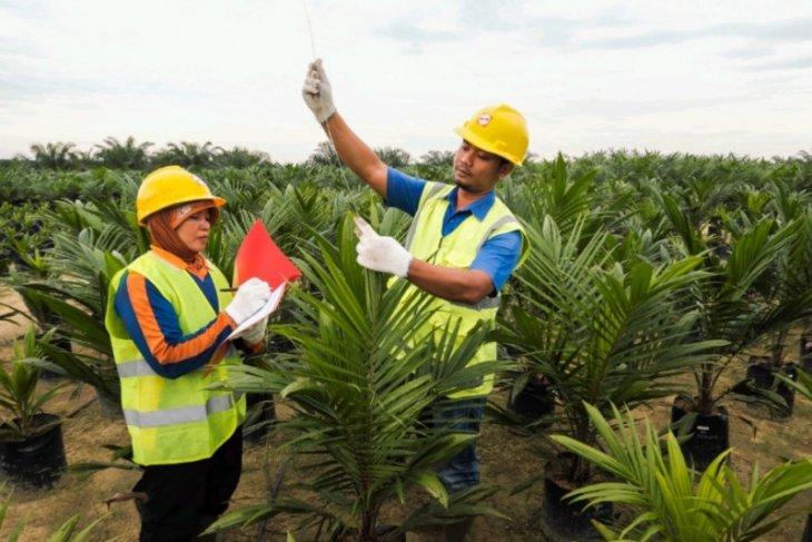 Mengenal praktik berkelanjutan kebun kelapa sawit tertua di Sumatera Utara
