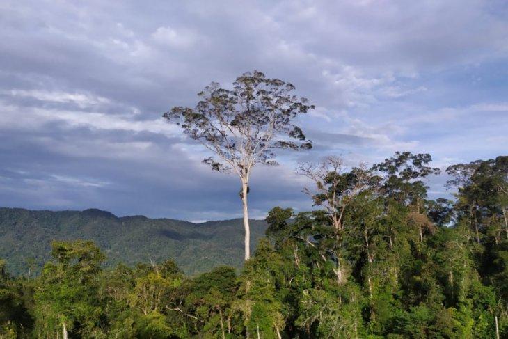22 desa di Kabupaten Merangin menerima dana afirmasi perhutanan sosial