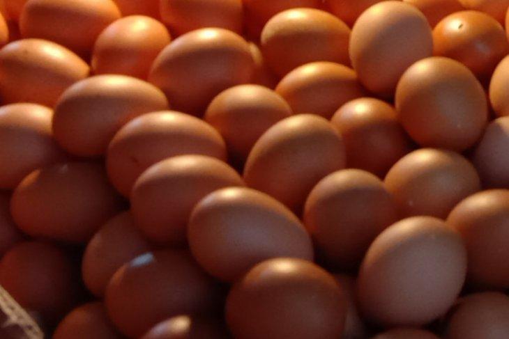 Harga telur ayam ras di pasar tradisional Kota Ambon turun