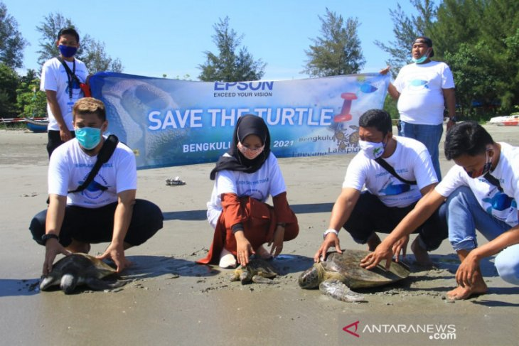 600 ekor tukik dilepas ke Pantai Tapak Padri Bengkulu