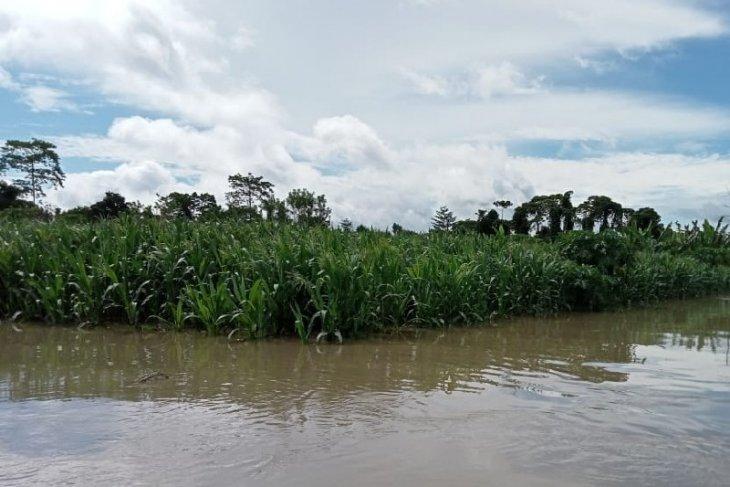 Seluas 4.500 hektar lahan pertanian di Keerom rusak akibat banjir