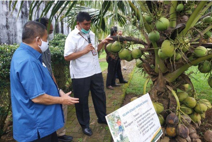 Gorontalo kerja sama dengan Balit Palma untuk pengembangan kelapa