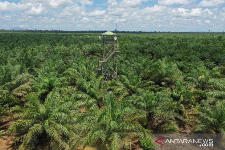 Program peremajaan sawit rakyat di Provinsi Kalbar 2021 seluas 12 ribu hektare