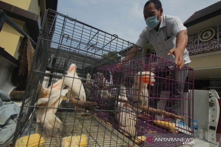 Polda Jatim ungkap kasus penjualan puluhan satwa dilindungi