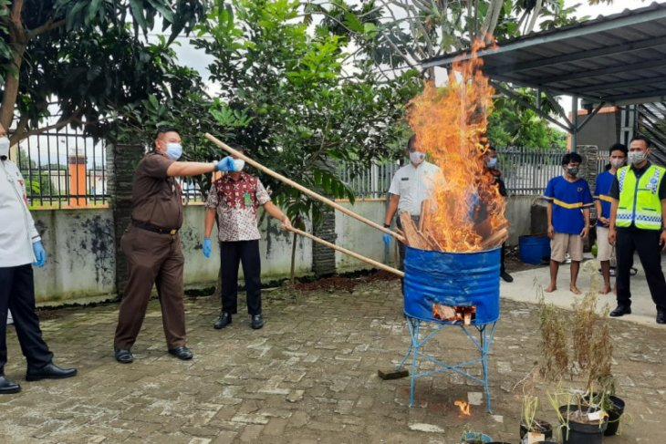 BNNP Banten musnahkan barang bukti narkoba ganja dan sabu-sabu asal Aceh
