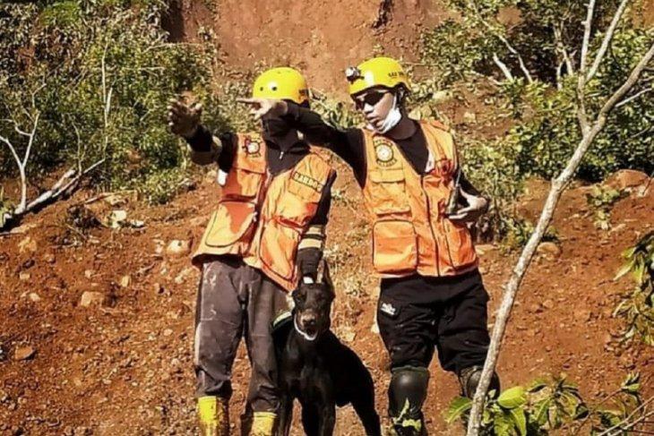 Kejelian anjing pelacak endus korban longsor di Nganjuk