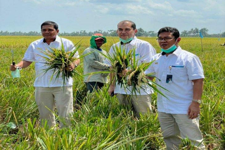 Bulog Sumut beli 3.451 ton beras petani