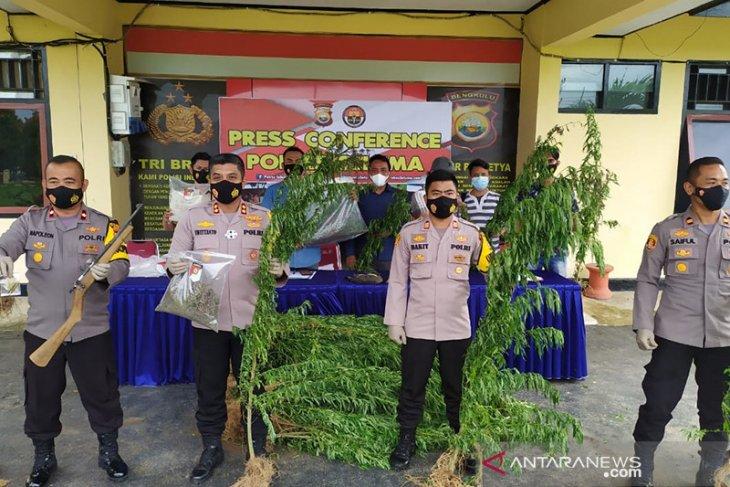 Polisi temukan 2 ha ladang ganja di Seluma Bengkulu