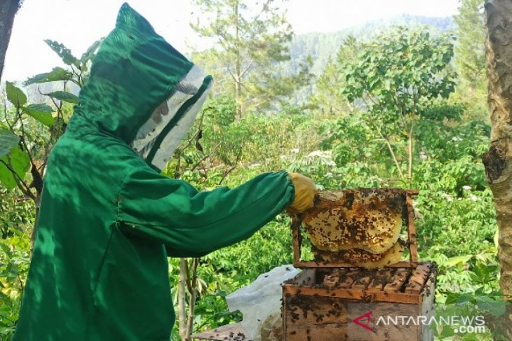 'Situak Ni Loba', madu hutan khas kawasan Danau Toba