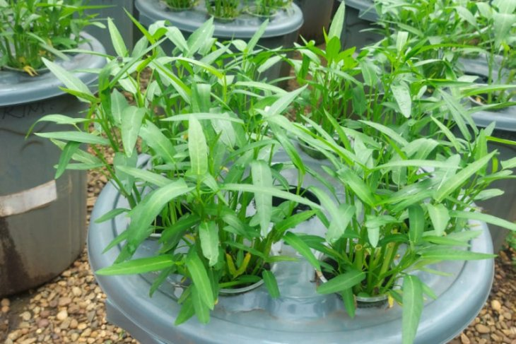 KKP memperkenalkan sistem teknologi budi daya ikan dalam ember