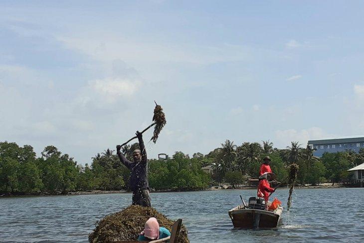 A sneak peek into rengkam paradise Amat Belanda Island