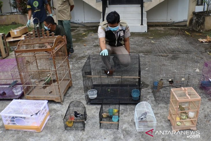 Ratusan burung  dicegah nyeberang ke Pulau Jawa