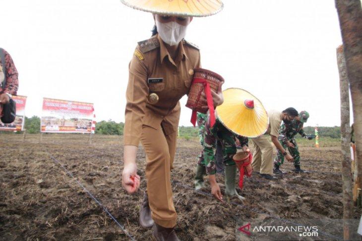 Kabupaten Landak maksimalkan pemanfaatan lahan replanting sawit