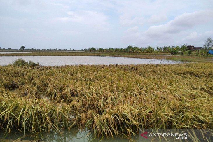 BMKG ingatkan potensi banjir tiga kabupaten di Kalbar