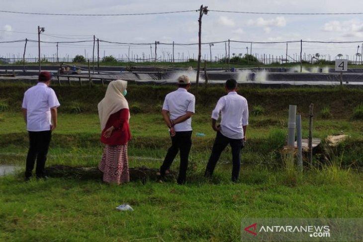 Budidaya udang vaname di Aceh Jaya jadi primadona