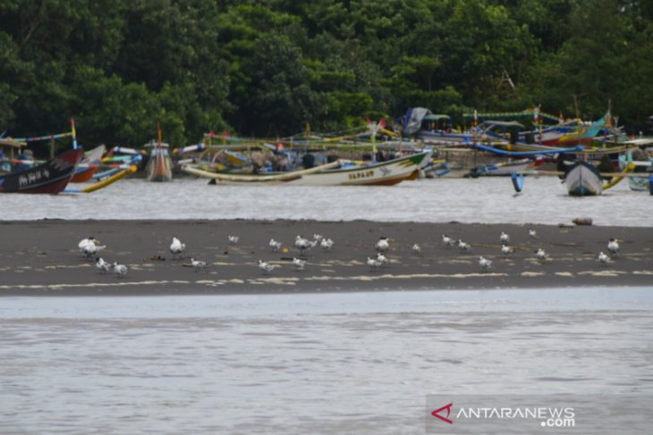 Universitas Jember berpartisipasi dalam Asian Waterbird Cencus Indonesia 2021