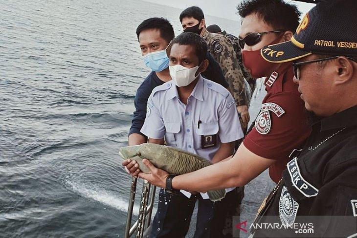 KKP selamatkan ikan langka napoleon hasil tangkapan ilegal