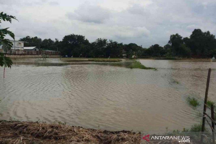 Ada 19.433 hektare sawah di Kabupaten Bekasi terendam banjir