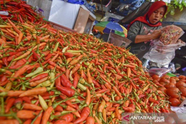 Belitung genjot produksi cabai untuk penuhi kebutuhan lokal