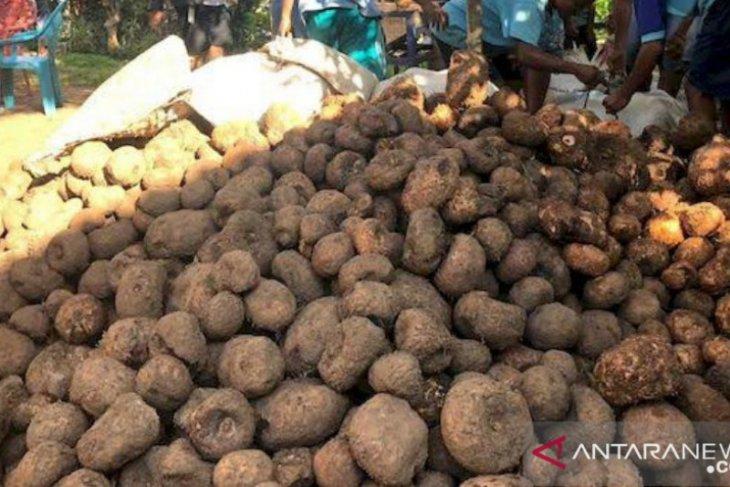 Balangan's porang penetrates international market