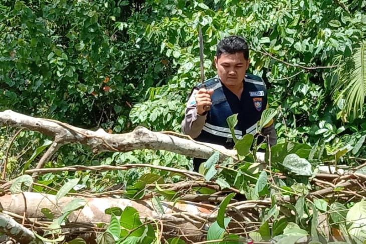 Polisi singkirkan pohon tumbang di Jalinsum Mukomuko