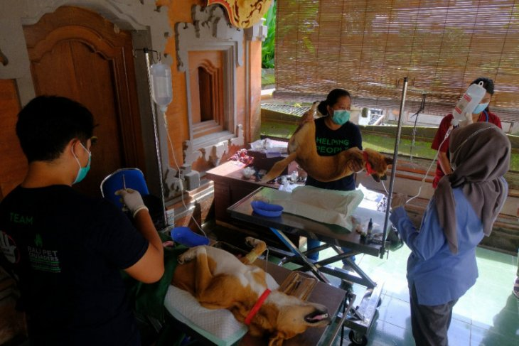 Distan Denpasar targetkan 80 persen anjing divaksin rabies (video)