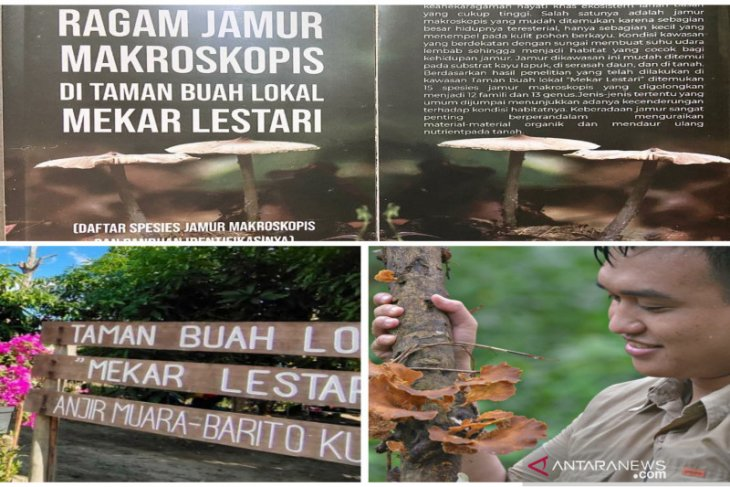 Biodiversitas Indonesia rilis buku ragam jamur makroskopis di Batola