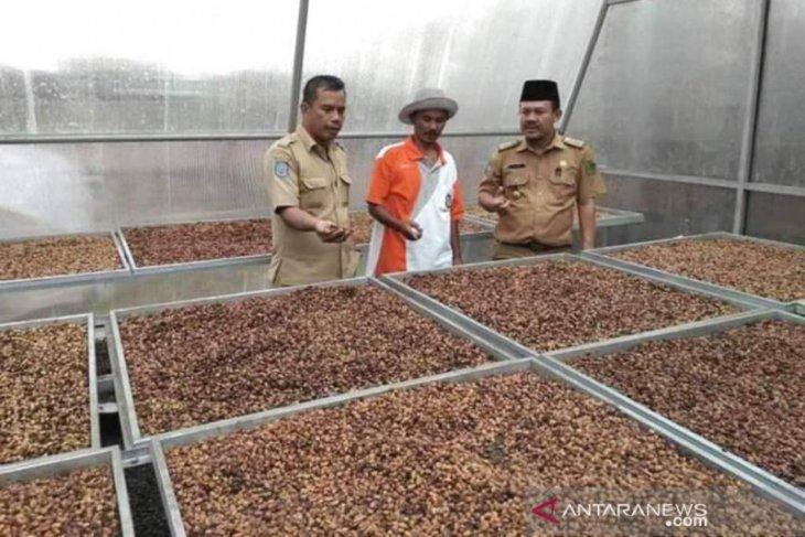 Tanaman kopi komoditas andalan masyarakat Rejang Lebong