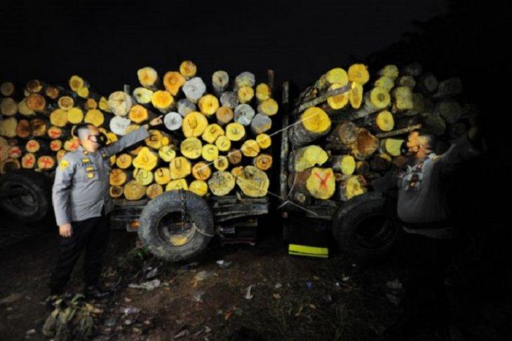 Tangkapan kayu ilegal di Jambi