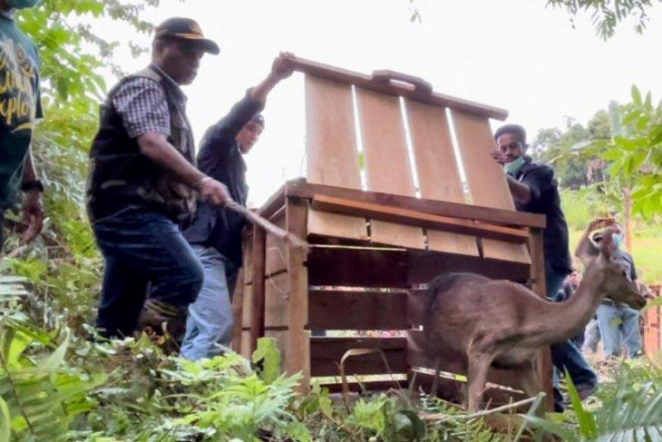 BKSDA Maluku Januari - Februari lepasliarkan ratusan satwa liar