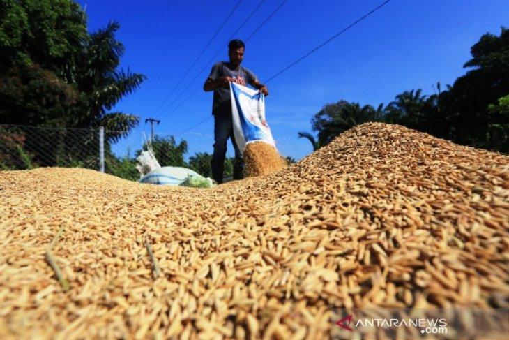 DPRA minta Bulog atasi anjloknya harga gabah petani