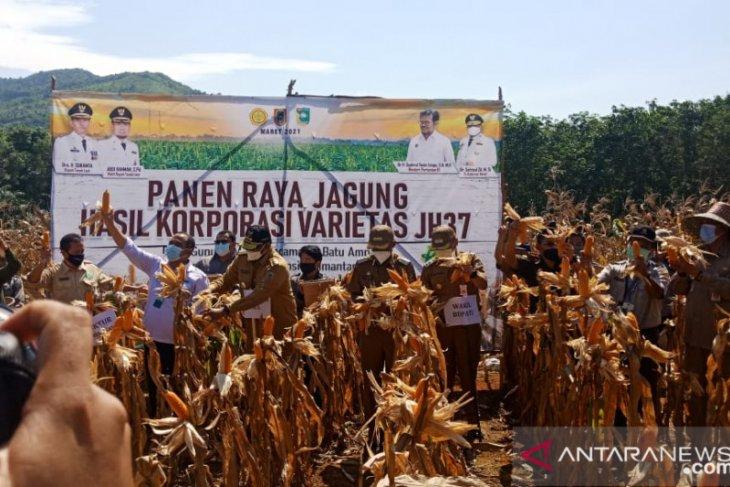 Penjabat Gubernur Kalsel panen raya bibit jagung katuju di Desa Gunung Melati