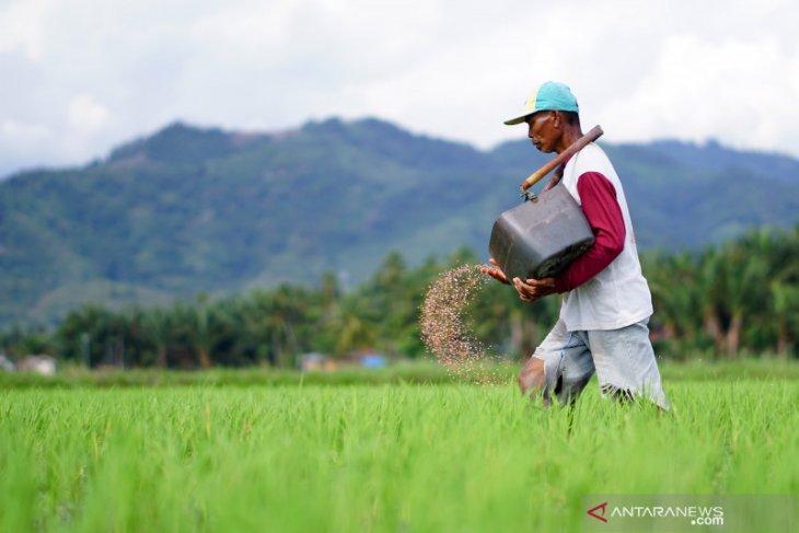 BPS: Nilai tukar petani Gorontalo turun 0,93 persen