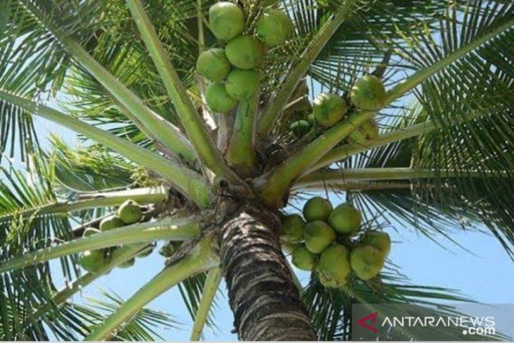 Produk turunan kelapa primadona ekspor Sulut