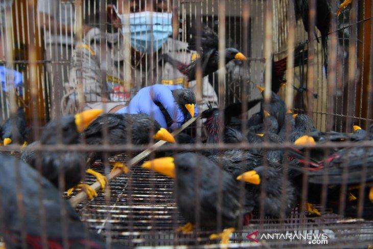 Karantina Pertanian Surabaya amankan ratusan satwa ilegal