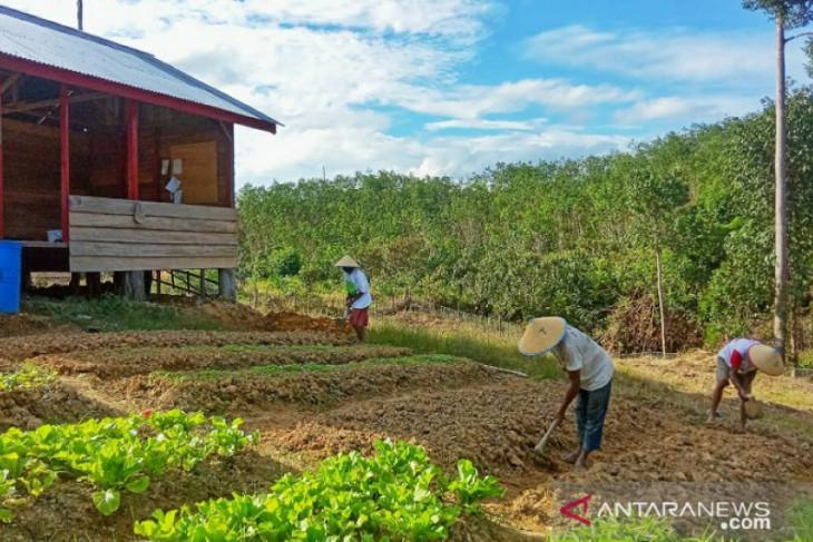 RLU berdayakan masyarakat sekitar kawasan hutan di Kabupaten Tebo