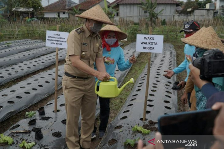 Pemkot Bogor dorong warga kreatif manfaatkan lahan jadi urban farming
