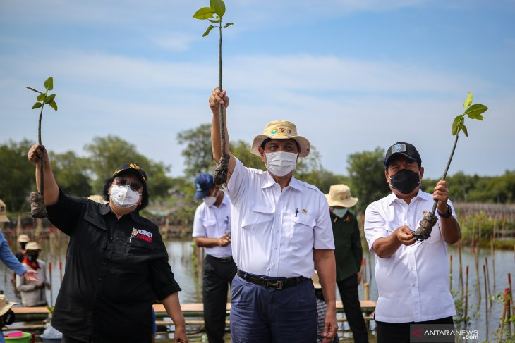 Conserve mangroves in tsunami-prone villages, minister